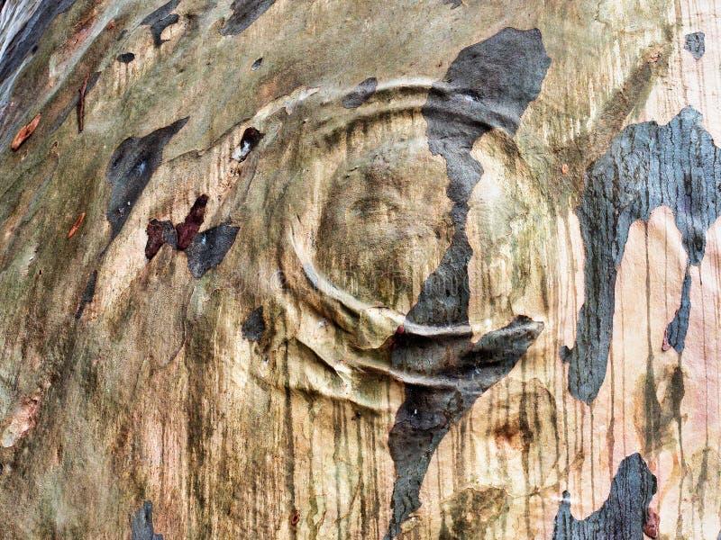 Imagen abstracta de la corteza de la goma azul foto de archivo