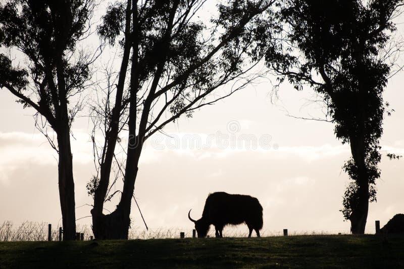 Imagen abstracta del campo de hierba de pasto animal fotos de archivo