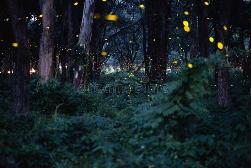 Imagen abstracta y mágica del vuelo de la luciérnaga en el bosque de la noche imágenes de archivo libres de regalías