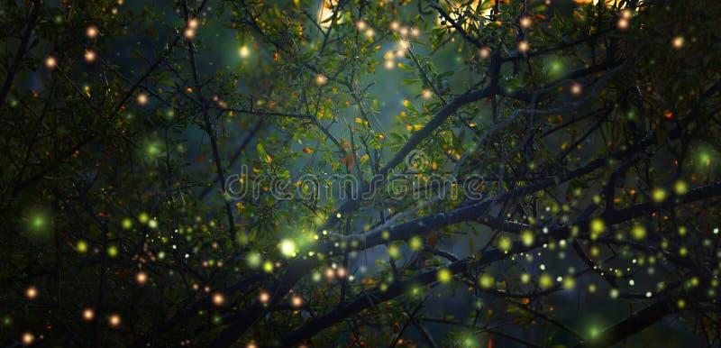 Imagen abstracta y mágica del vuelo de la luciérnaga en el concepto del cuento de hadas del bosque de la noche imagenes de archivo