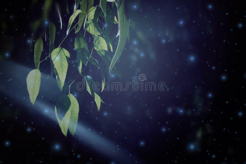 Imagen abstracta y mágica del vuelo de la luciérnaga en el concepto del cuento de hadas del bosque de la noche imagen de archivo libre de regalías
