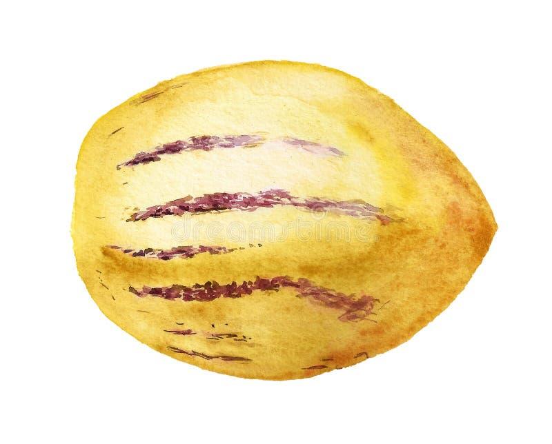 Imagen acuarela de fruta dulce de pepino fotos de archivo
