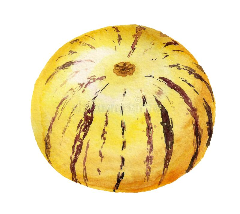 Imagen acuarela de fruta dulce de pepino fotos de archivo libres de regalías