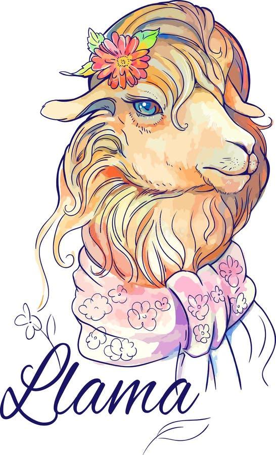 Imagen aislada del lama lindo libre illustration