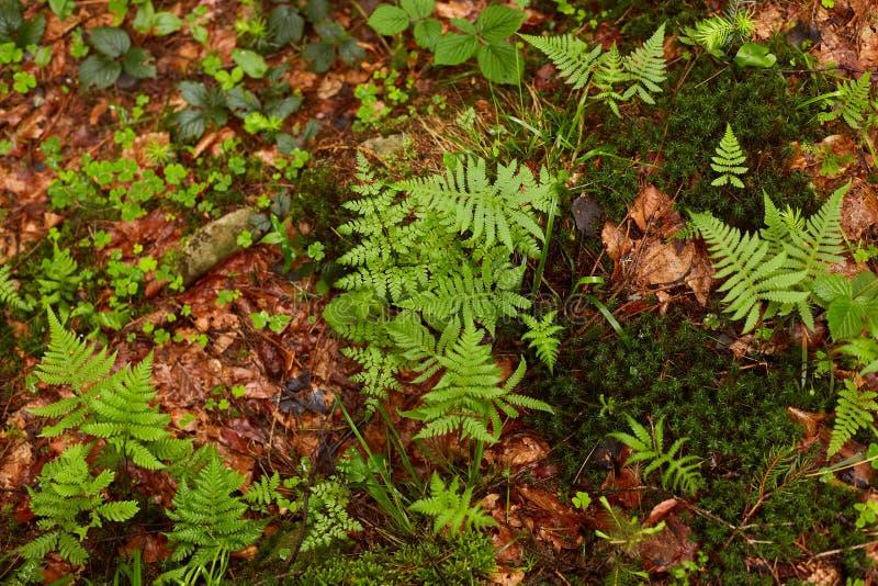 Imagen al aire libre de las plantas del bosque que crecen a lo largo de las trayectorias, hojas verdes y amarillas que son mojada fotografía de archivo libre de regalías