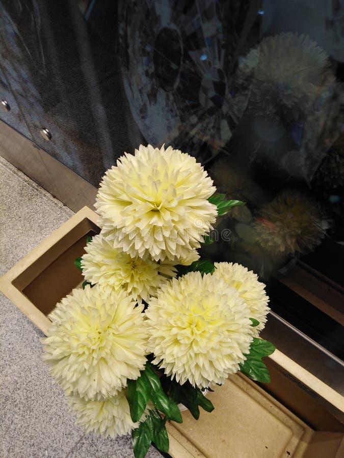 Imagen amarilla de las flores Textura amarilla de los pétalos imagenes de archivo