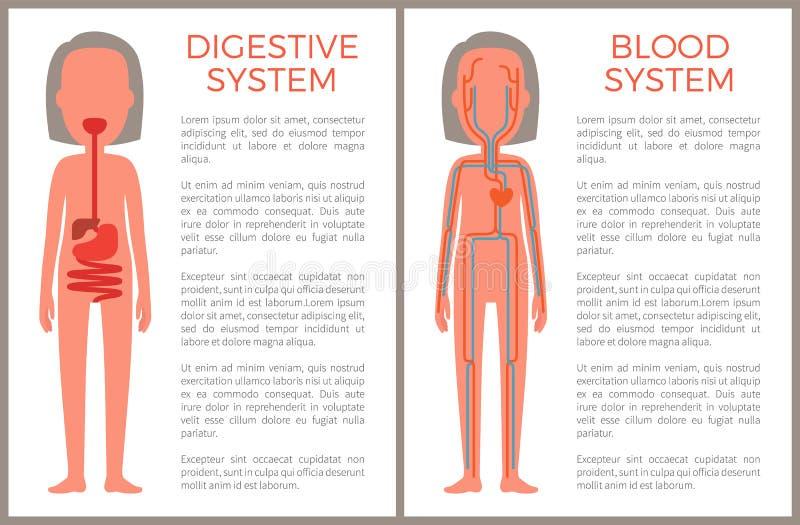 Imagen anatómica digestiva y de la sangre del sistema del color libre illustration