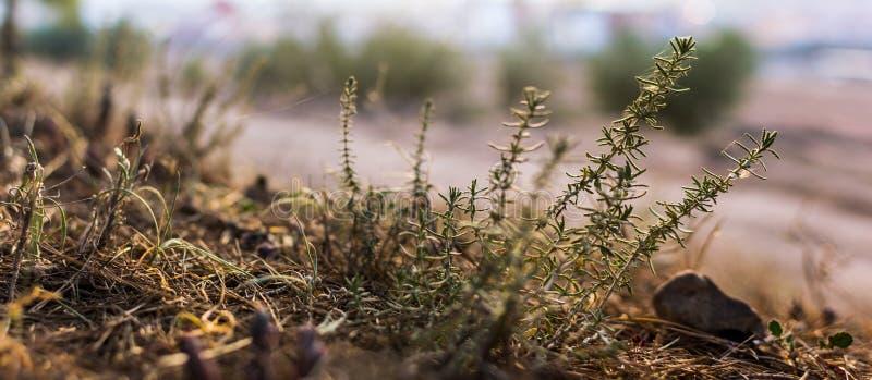 Imagen ascendente cercana de la flor de la hierba en la montaña foto de archivo libre de regalías