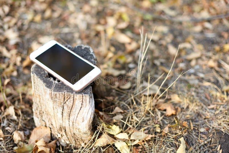 Imagen ascendente cercana del teléfono móvil ligero con la pantalla negra dejada en el tocón del bosque, fondo del otoño de la na imagen de archivo
