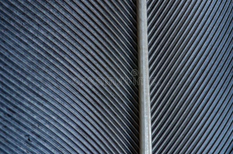 Imagen blanco y negro de un pedazo de plumas de p?jaro, primer imagen de archivo
