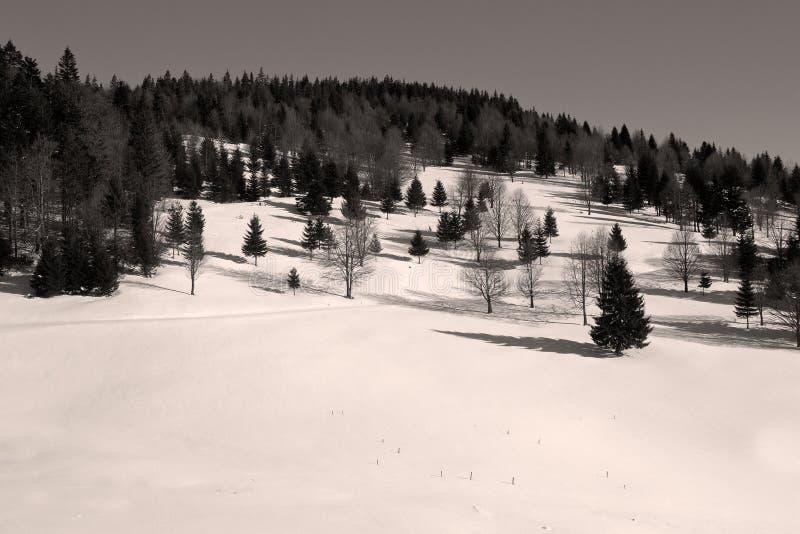 Imagen blanco y negro del borde del bosque fotos de archivo libres de regalías