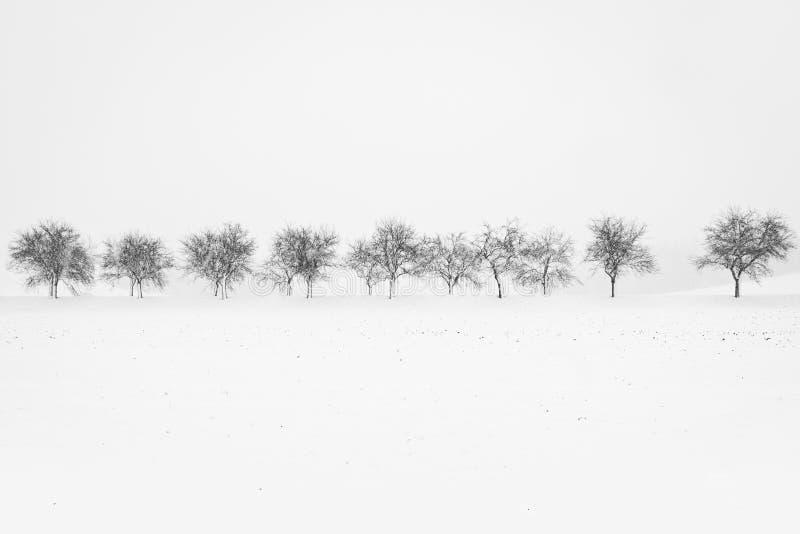 Imagen blanco y negro del callejón de árboles durante nevada imagen de archivo