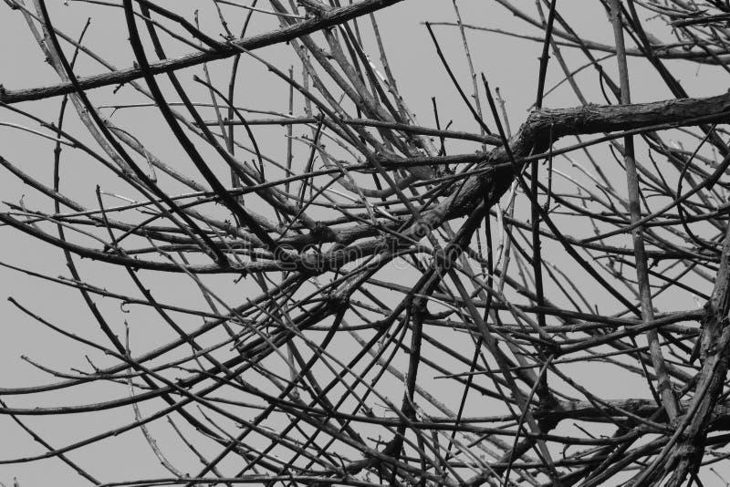 Imagen blanco y negro marchitada de las ramas imagen de archivo libre de regalías
