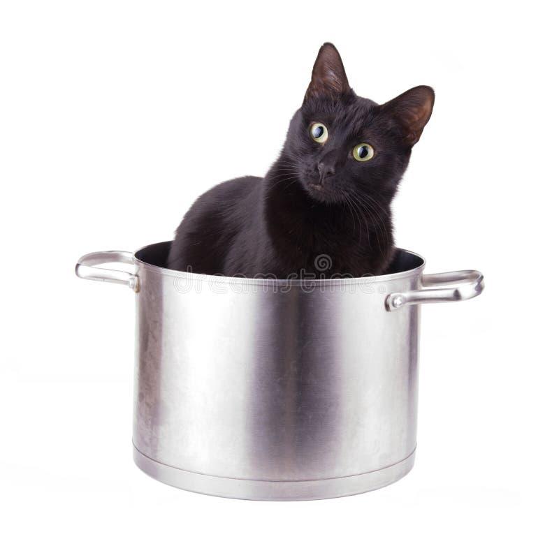 Imagen chistosa de un gato negro que se sienta en un pote grande de la salsa fotos de archivo libres de regalías