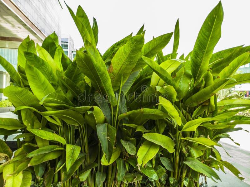 Imagen clara del alto contraste de una planta en el jardín fotografía de archivo libre de regalías