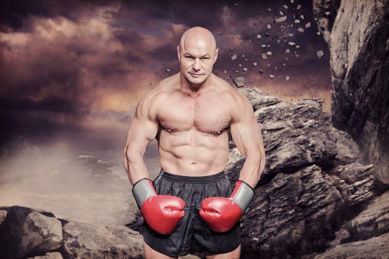 Imagen compuesta del retrato integral del boxeador calvo que dobla los músculos imagenes de archivo