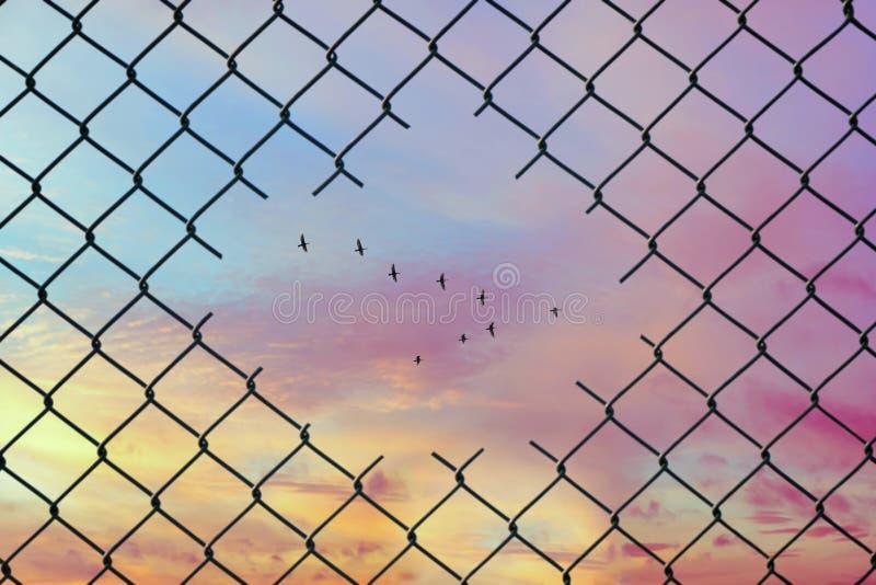 Imagen conceptual de los pájaros que vuelan en la forma de v en el agujero de la cerca de alambre de acero de la malla imagen de archivo