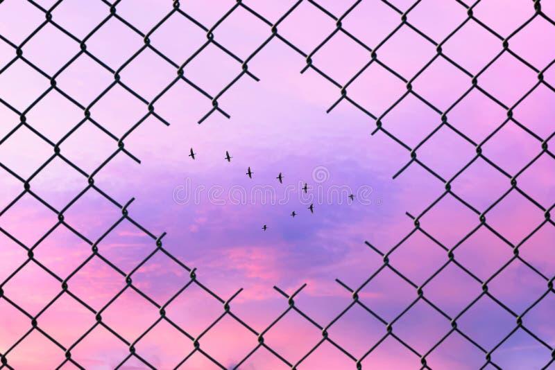 Imagen conceptual de los pájaros que vuelan en la forma de v en el agujero de la cerca de alambre de acero de la malla imagen de archivo libre de regalías