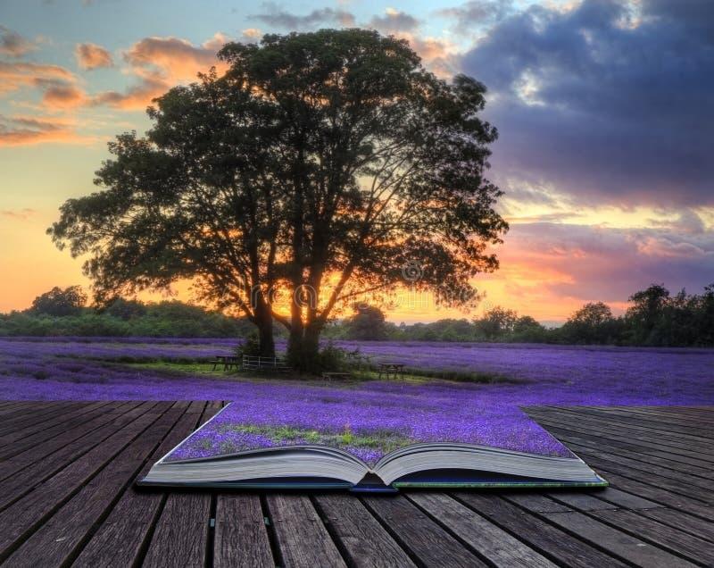 Imagen creativa del concepto de la lavanda en puesta del sol imágenes de archivo libres de regalías