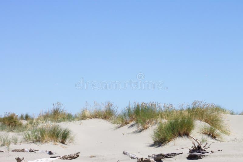 Imagen de fondo de la hierba del toi del toi que crece encima de una duna de arena contra un cielo azul del verano fotografía de archivo libre de regalías