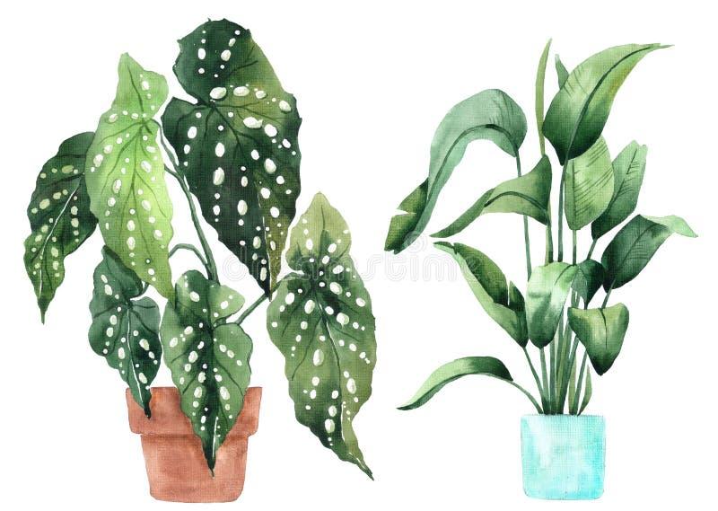 Imagen de la acuarela con las hojas tropicales y las hojas de plantas interiores Planta casera en potes greenery jugoso Ilustraci fotografía de archivo libre de regalías
