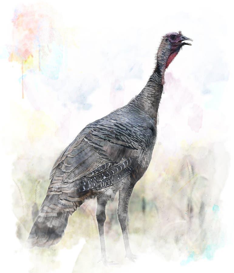 Imagen de la acuarela del pájaro de Turquía ilustración del vector