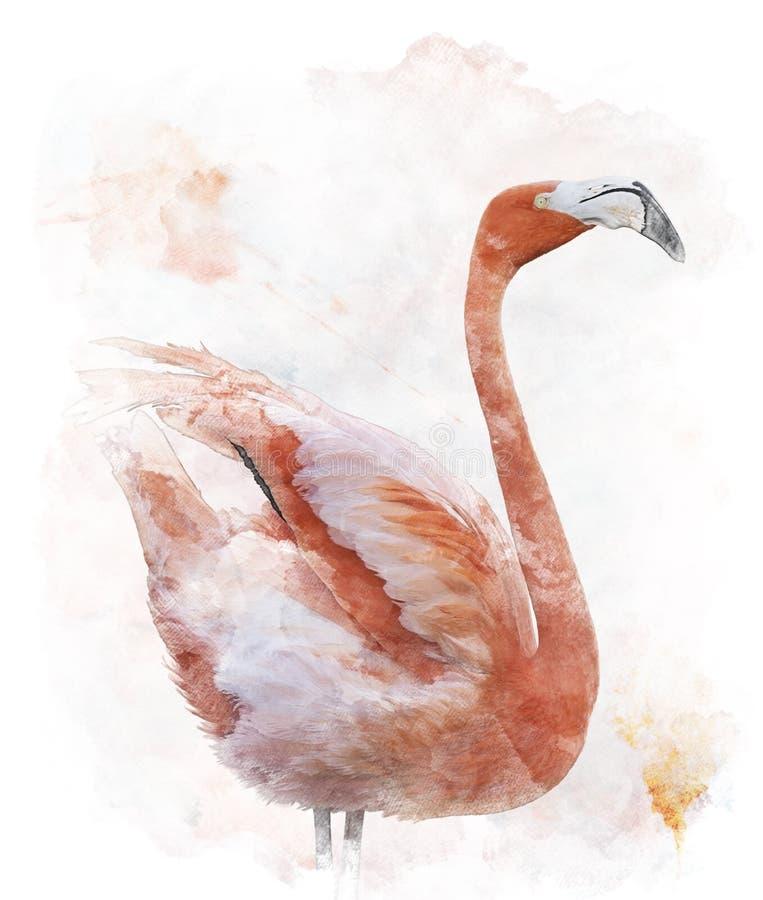 Imagen de la acuarela del pájaro del flamenco stock de ilustración