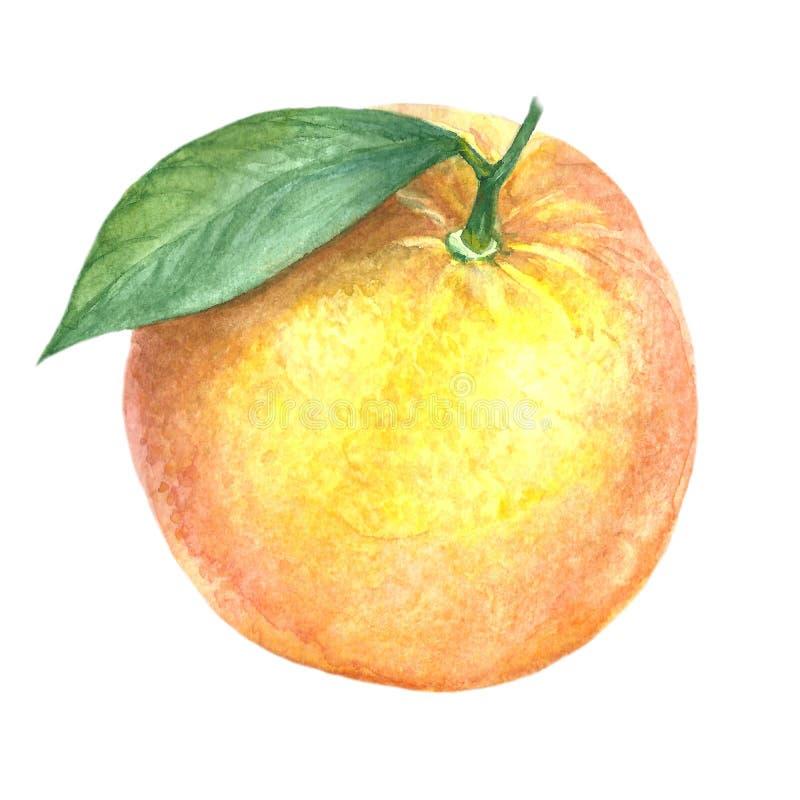 Imagen de la acuarela de la fruta anaranjada stock de ilustración