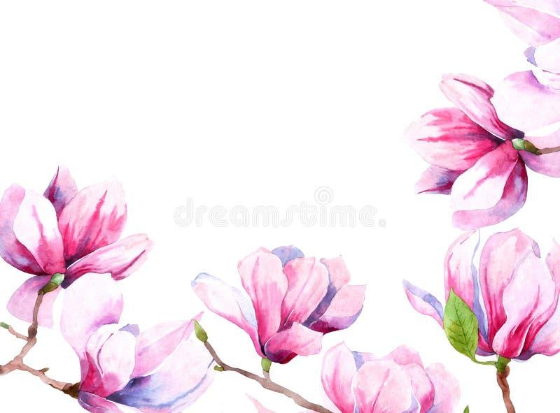 Imagen de la acuarela de las flores de la magnolia Floraci?n de la primavera de la magnolia tarjeta de felicitaci?n e invitaci?n  foto de archivo libre de regalías