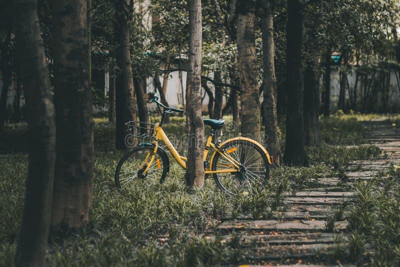 Imagen de la bici amarilla en bosque fotografía de archivo
