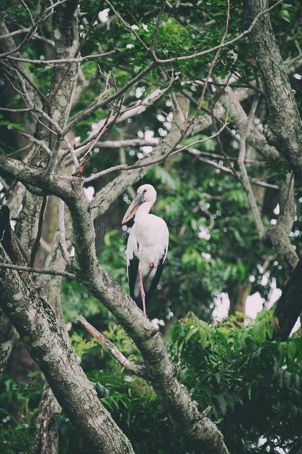 Imagen de la cigüeña encaramada en rama de árbol imagen de archivo