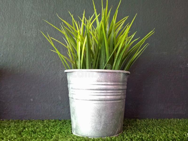 Imagen de la hierba orgánica verde del trigo foto de archivo