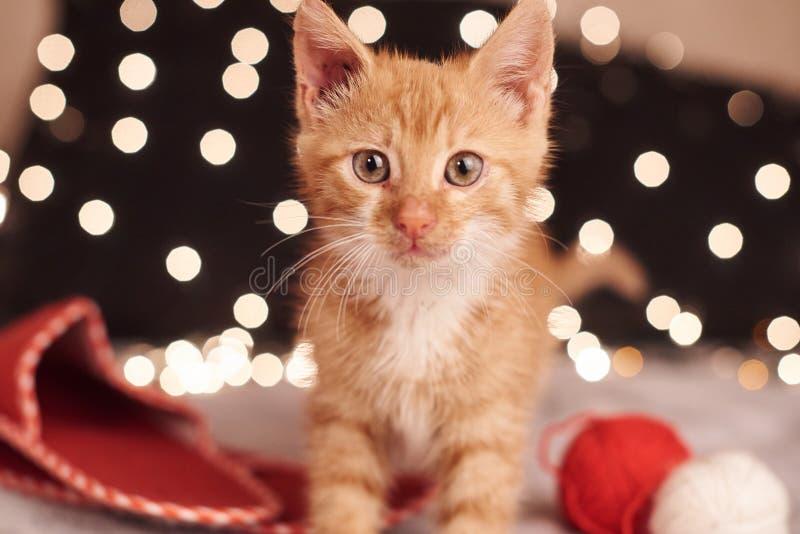 Imagen de la Navidad con un gato lindo del jengibre de luces coloridas en el fondo imagen de archivo