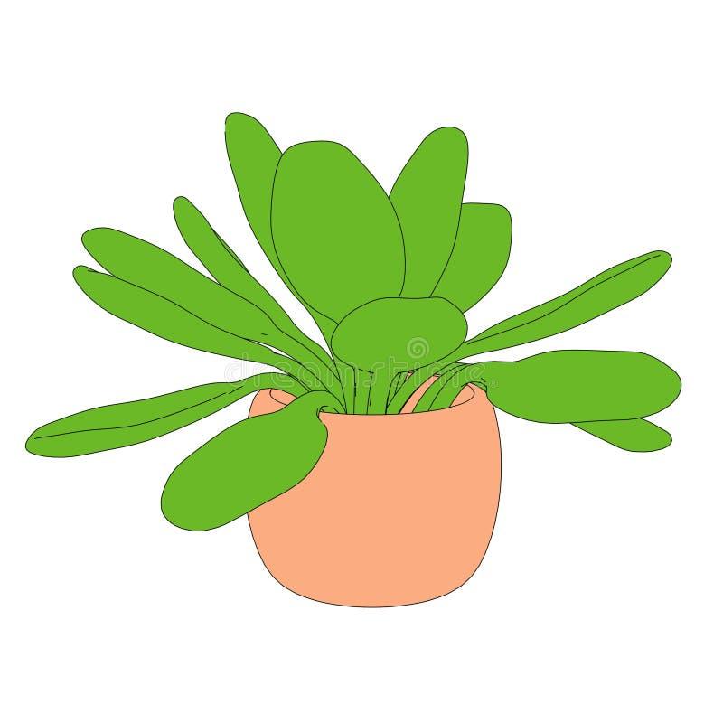 Imagen de la planta en pote libre illustration