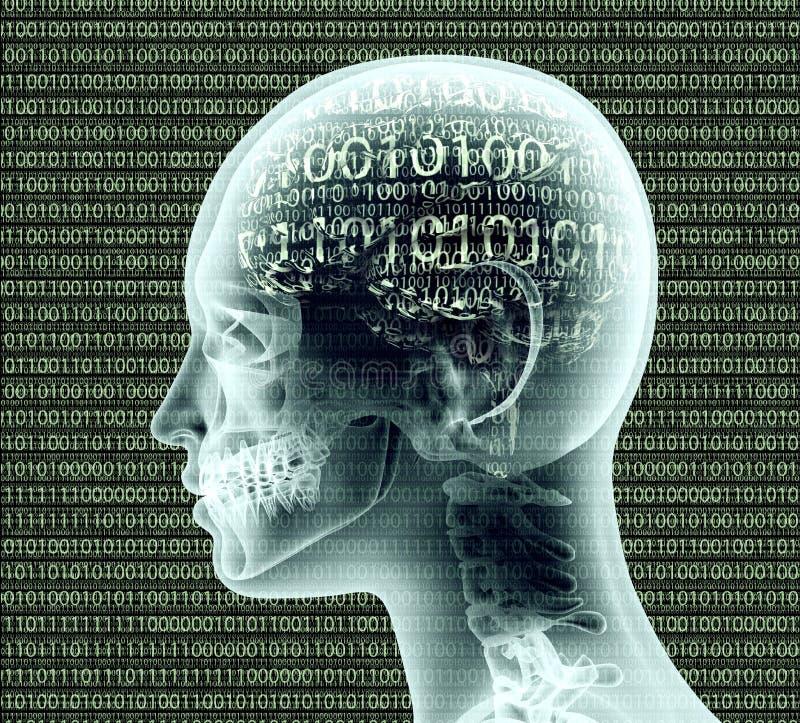Imagen de la radiografía de la cabeza humana con el código binairy para un cerebro ilustración del vector