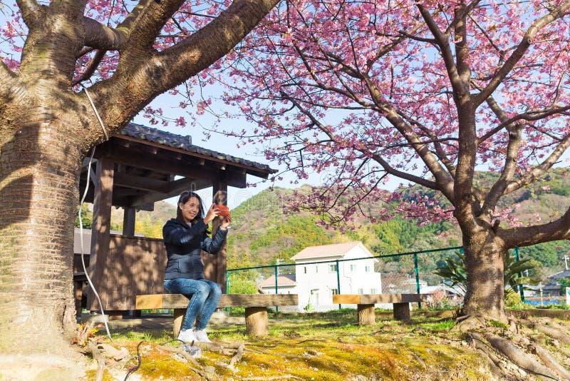Imagen de la toma de la mujer por el teléfono móvil debajo del árbol de Sakura imagen de archivo