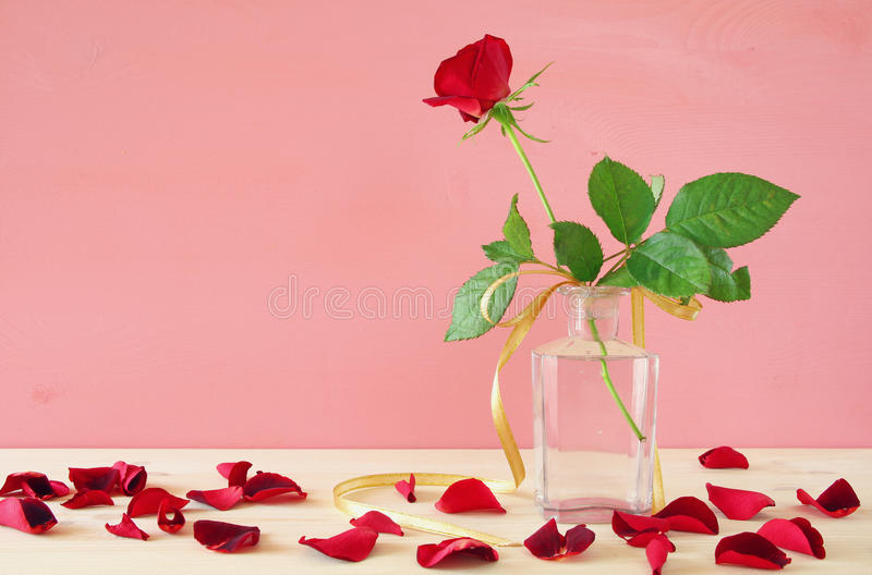 Imagen de la una rosa hermosa del rojo en el florero fotografía de archivo libre de regalías