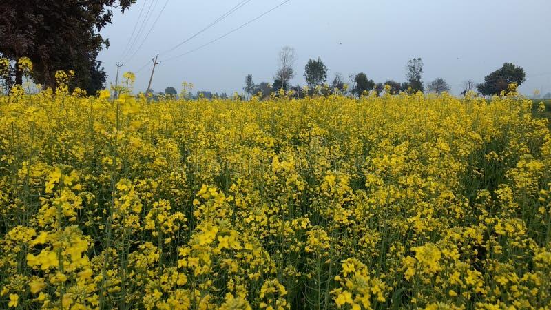 Imagen de las flores hermosas en el campo de mi pueblo imágenes de archivo libres de regalías