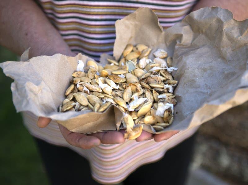 Imagen de las semillas de calabaza fotografía de archivo