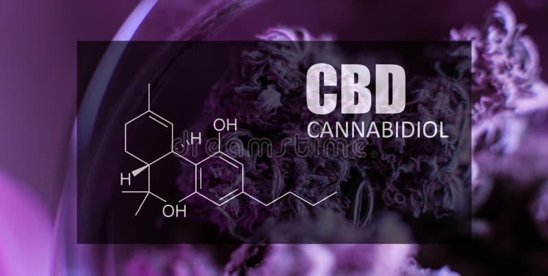 Imagen de los brotes del cáñamo del primer de la fórmula CBD Concepto curativo de la marijuana imagen de archivo libre de regalías