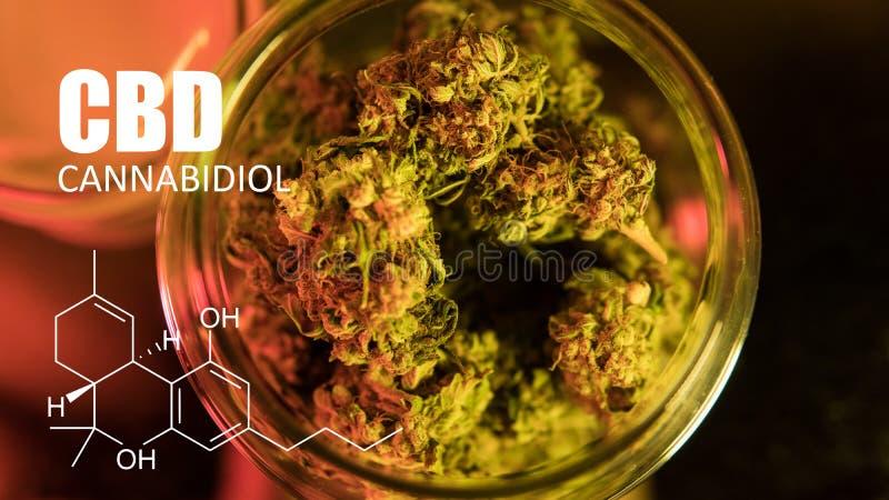 Imagen de los brotes del cáñamo del primer de la fórmula CBD Concepto curativo de la marijuana fotografía de archivo libre de regalías