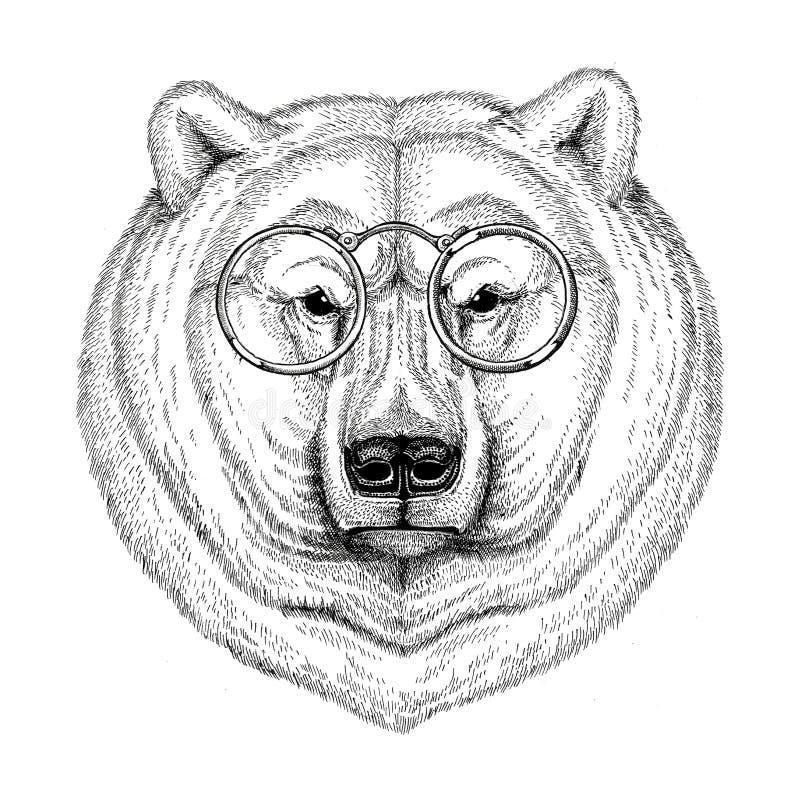 Imagen De Moda Fresca Del Oso Polar Para El Tatuaje, Logotipo ...