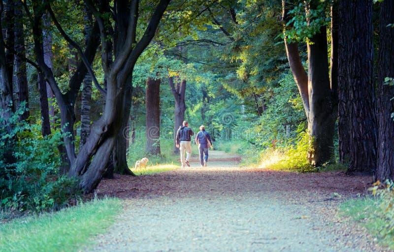 Imagen de pares con el perro que camina a través del bosque de detrás fotos de archivo