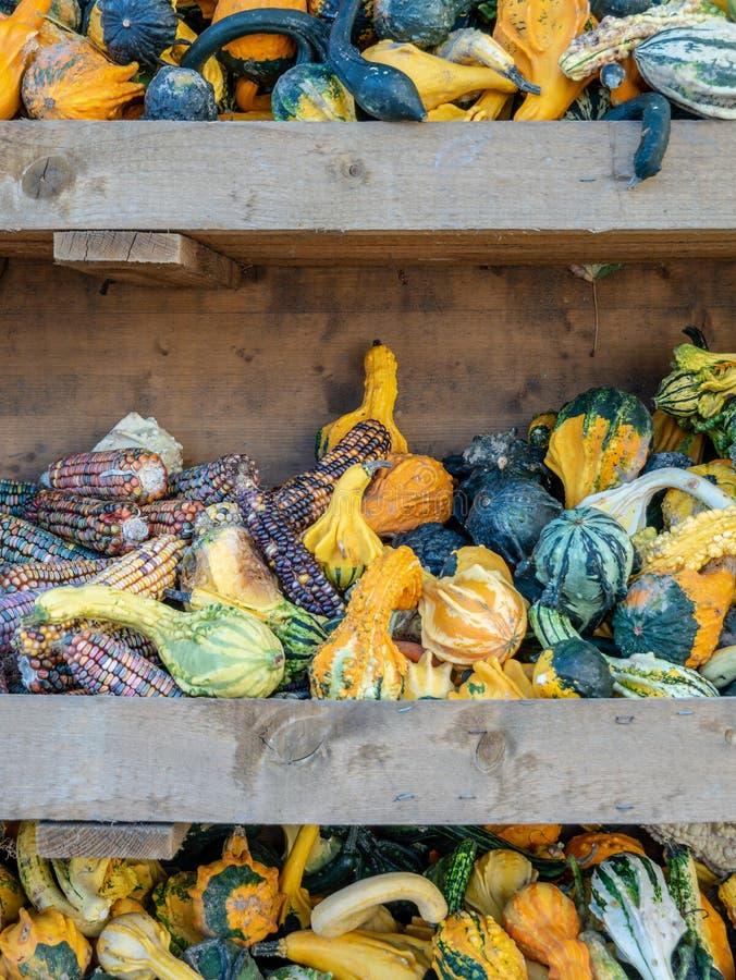 Imagen de pequeños pumkins y maíz en un estante foto de archivo libre de regalías