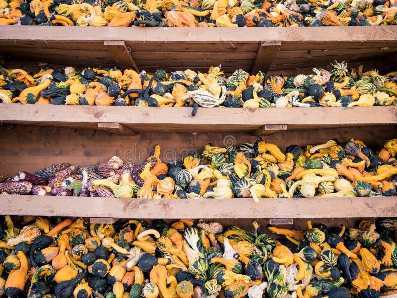 Imagen de pequeños pumkins y maíz en un estante imagen de archivo