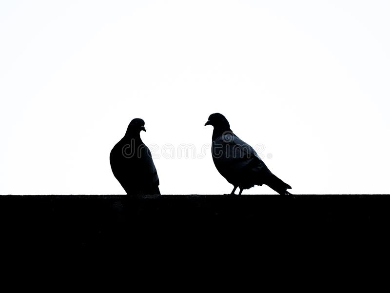 Imagen de siluetas de palomas con el fondo blanco imagen de archivo libre de regalías