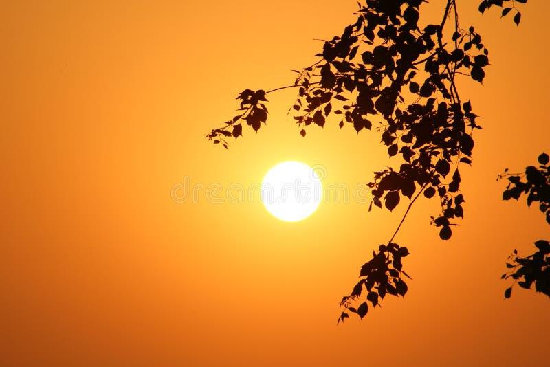 Imagen de Sun fotografía de archivo