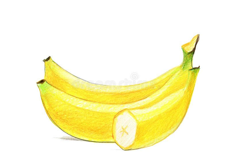 Imagen de un manojo de pl?tanos Dibujo con los l?pices coloreados, aislados en el fondo blanco ilustración del vector