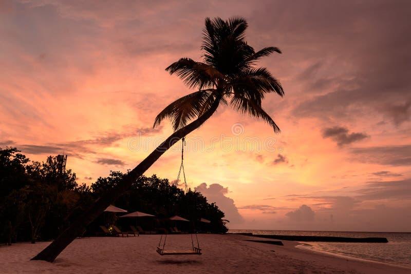 Imagen de una palmera y un oscilaci?n durante puesta del sol fotos de archivo libres de regalías