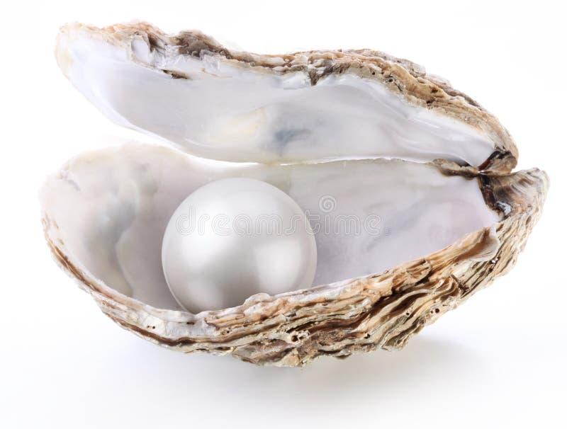 Imagen de una perla blanca en un shell en un blanco fotos de archivo